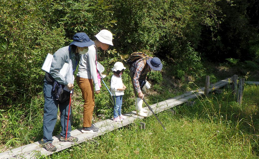 緑の自然観察会